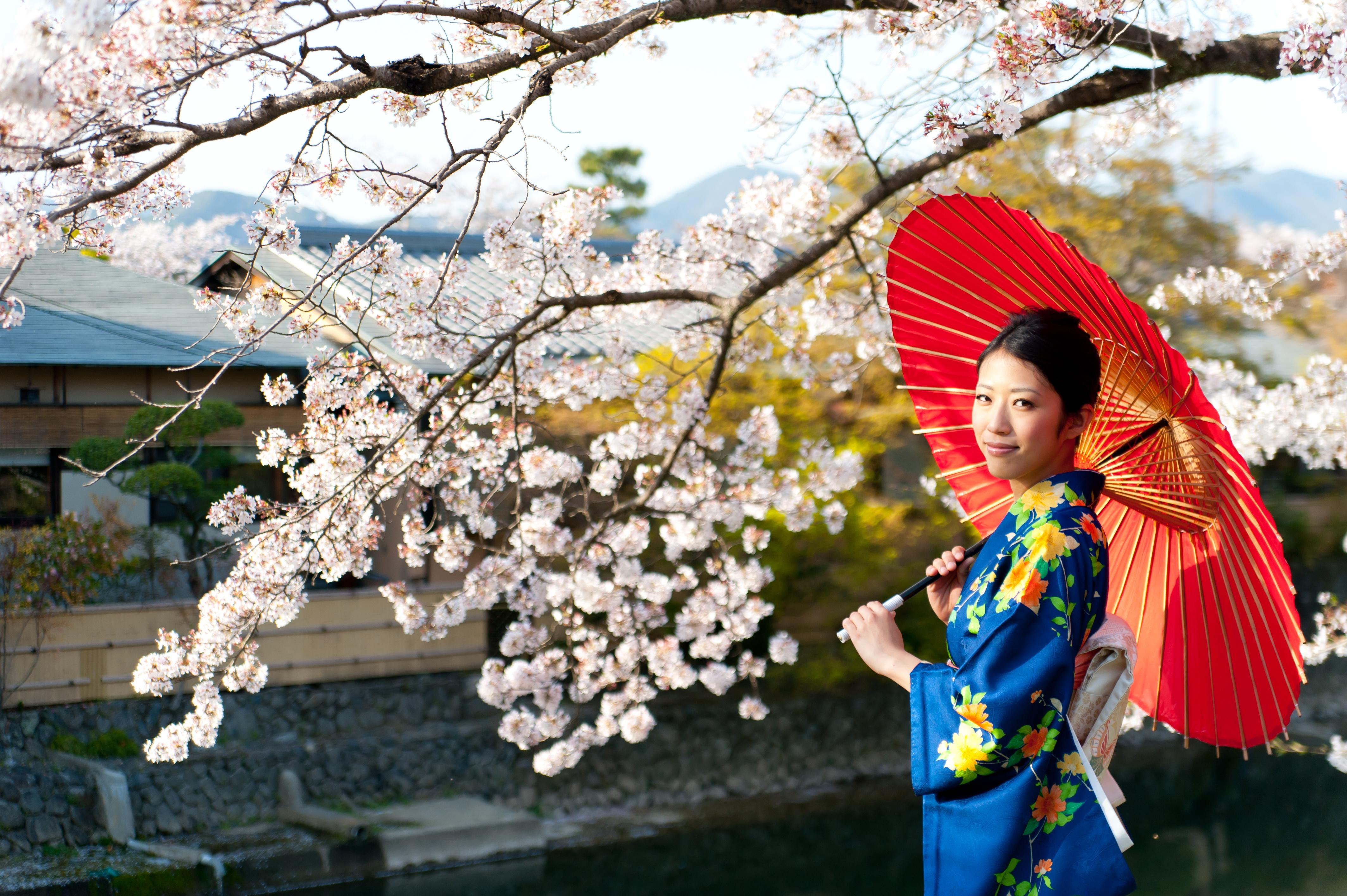 fest japanesse beatiful